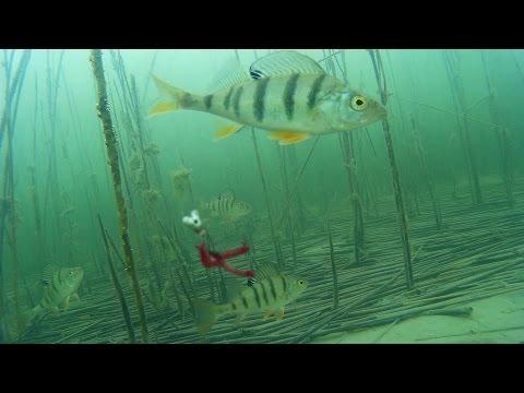 зимняя рыбалка новосибирская область озеро чаны