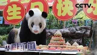 """[中国新闻] 重庆:熊猫界""""百岁老人""""过生日 拥有137只后代   CCTV中文国际"""