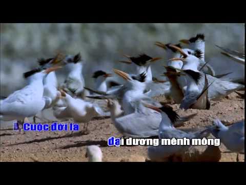 Hát ru tình yêu    Đan Trường ft  Hồ Quỳnh Hương « Karaoke High Definition 1