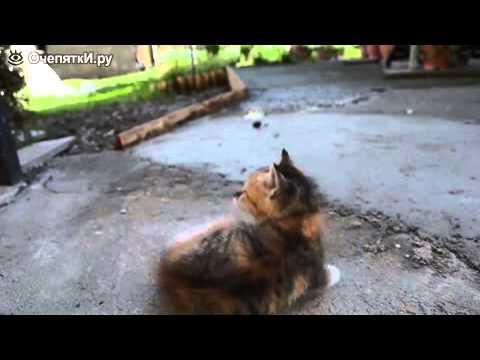 Как можно успокоить кошку