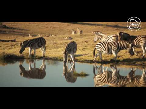 WEP : Wildlife Conservation in South Africa, Port Elizabeth