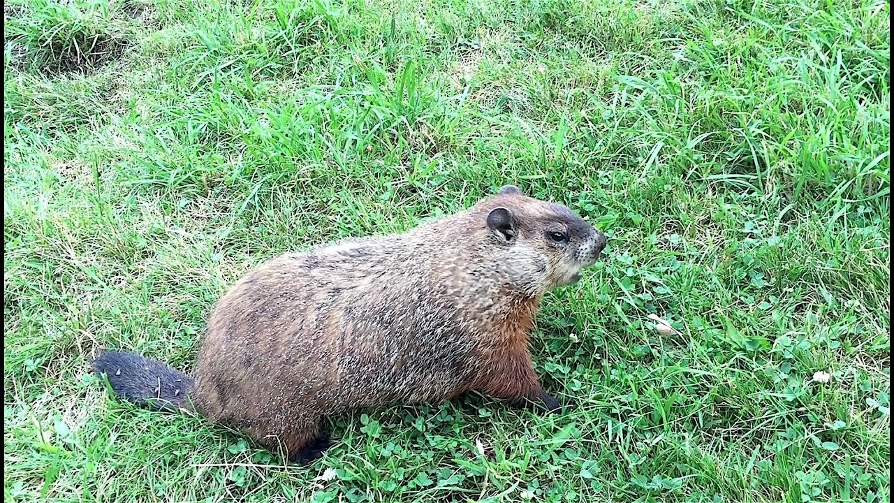 Groundhog Day Learning to relax