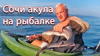 Лазаревське 2️⃣0️⃣1️⃣9️⃣ рибалка, акула і сама отруйна риба.