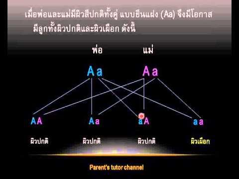 การถ่ายทอดลักษณะทางพันธุกรรม ข้อ 4 วิชาวิทยาศาสตร์ ช่วงชั้นที่ 2