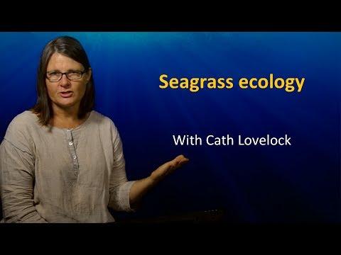 UQx TROPIC101x 3.2.3 Seagrass Ecology