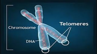 Regenerate your Telomeres and Stay Young Forever - Rain Sounds