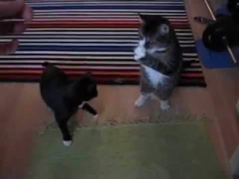 cat dancers youtube