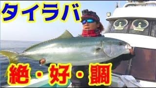 鯛の白子を求めて船に乗ったらあの大物も釣れた!! thumbnail