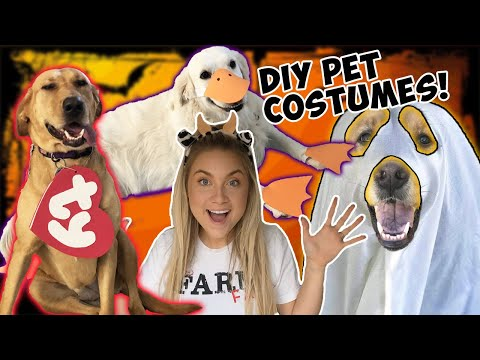Dressing ALL MY DOGS Up For Halloween | DIY Dog & Pet Costumes