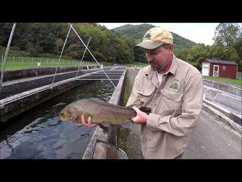 Raising Trout In Virginia - Episode 1