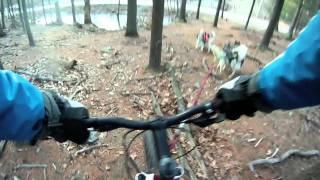 Training 4 Dawg Teams Mushing : Intense Mtb Trails