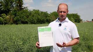 Demo Farma Wilczyniec - Belkar + Kliper herbicydy do zwalczania chwastów w rzepaku
