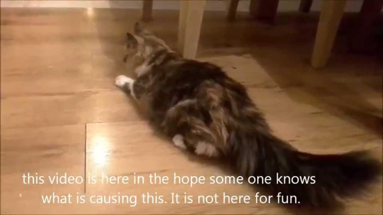 Cat Seizure Flea