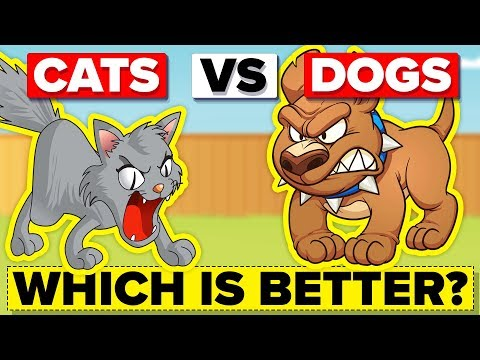 Dogs VS Cats - Which One Is The Superior Species?