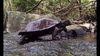 Animales en la selva, Manolazo y un instagramer