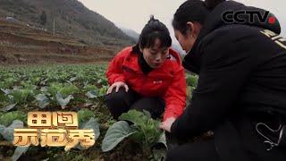 《田间示范秀》山里菜花山外香 20200319   CCTV农业