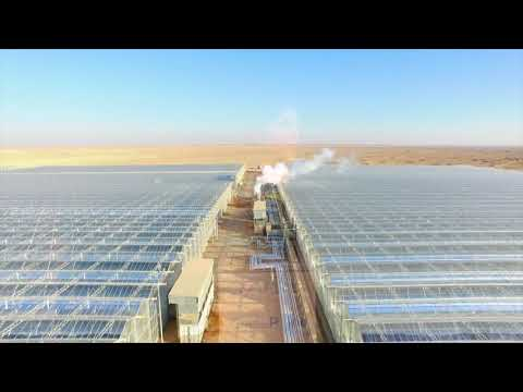 Why is Aera Energy becoming a leader in using solar energy on the oilfield?