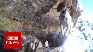 Can scaredy dog stuck on cliff be saved?   BBC News