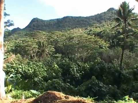 Jungle walk in the Raiatea Island French Polynesia 2008 (better resolution film 2013)