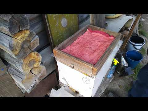 Опрыскивание пчел эндовиразой