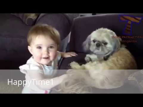 New Video Best Compilation Funny Dog 2016