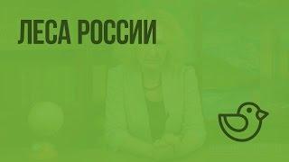 Леса России. Видеоурок по окружающему миру 4  класс