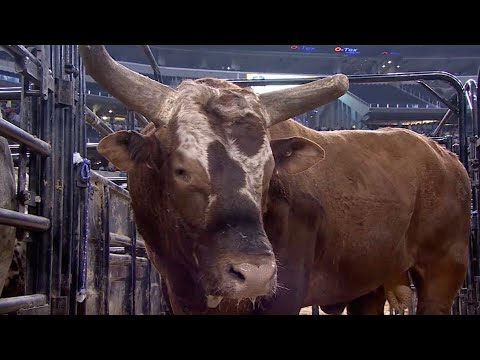 Joao Ricardo Vieira Battles Bushwacker for $1000000   Iron Cowboy