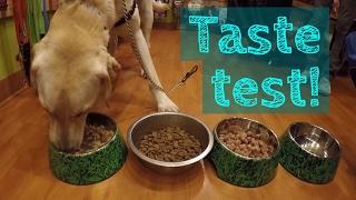 TASTE TEST! Should you feed your dog RAW FOOD?