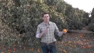 Live from the Fields: Citrus Freeze Ramifications. San Joaquin Valley, CA