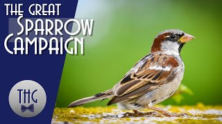 The Great Sparrow Campaign