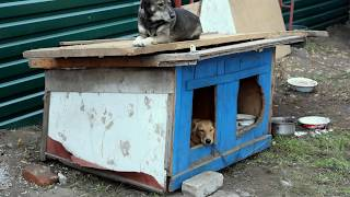 Собачий  приют в Запорожье. фото Сергея ТОМКО