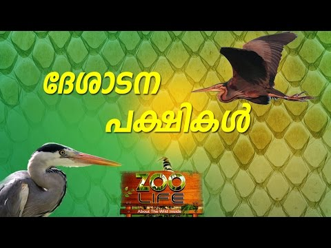 Awesome Bird Facts - Purple Heron | Grey Heron | White Stork | ZOO  LIFE | Kaumudy TV