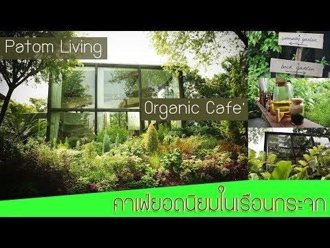 ร้านกาแฟออแกนิค ออกซิเจนกลางกรุง By Patom Organic Linving Cafe