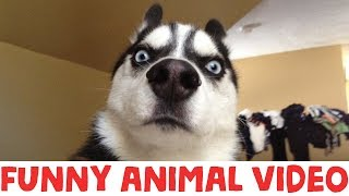 IMPOSSIBLE TRY NOT TO LAUGH - FUNNY ANIMAL COMPILATION