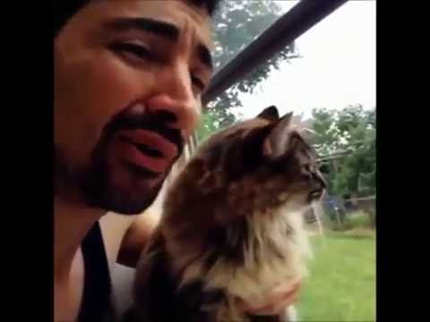 Vines Funny Cats OMG Videos 1# HD