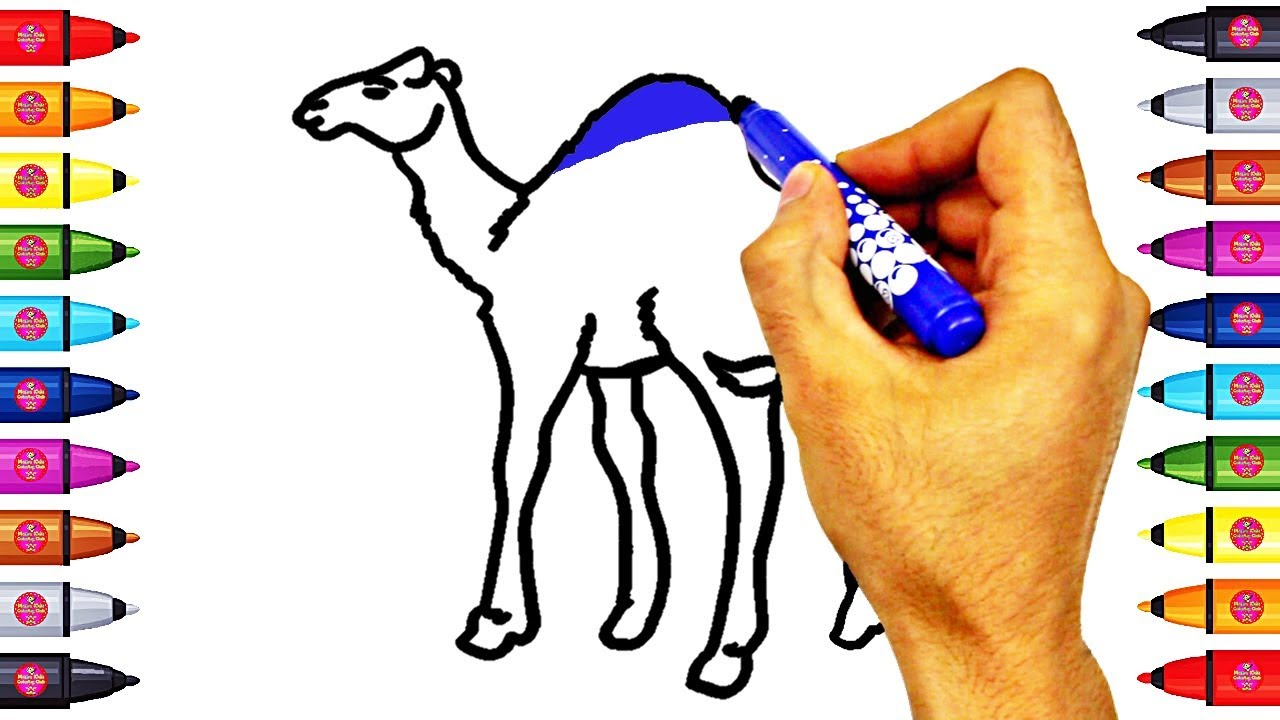 coloring camel for kids camel coloring page book youtube