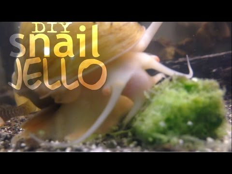 Simple Apple Snail Jello (gel Food)