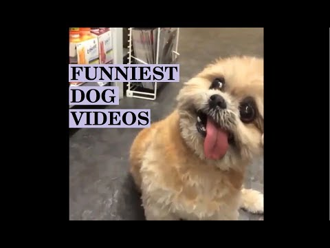 ULTIMATE FUNNY AND CUTE DOG VIDEOS - Try not to laugh! Best compilation of 2018!