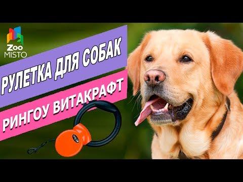 Рулетка для собак Рингоу Витакрафт   Обзор рулетки   Ringgo Vitakraft - Roulete For Dogs Review