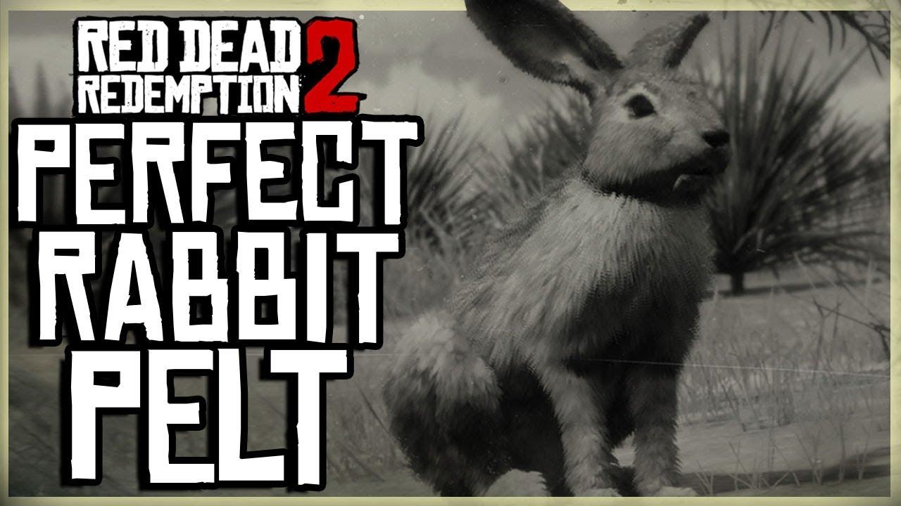 how to get a perfect rabbit pelt red dead redemption 2 pristine black tailed jackrabbit hunt. Black Bedroom Furniture Sets. Home Design Ideas