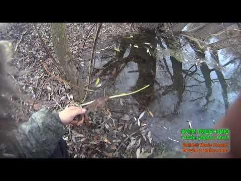 Как поймать норку капканами
