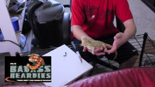 Fire & Ice Bearded Dragon Unboxing!