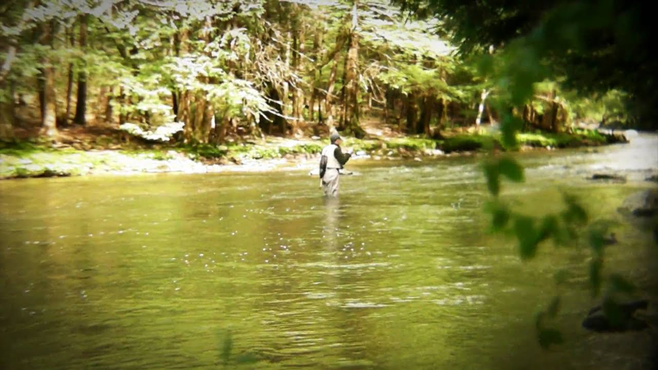 Fly fishing laurel hill creek youtube for Fly fishing pa