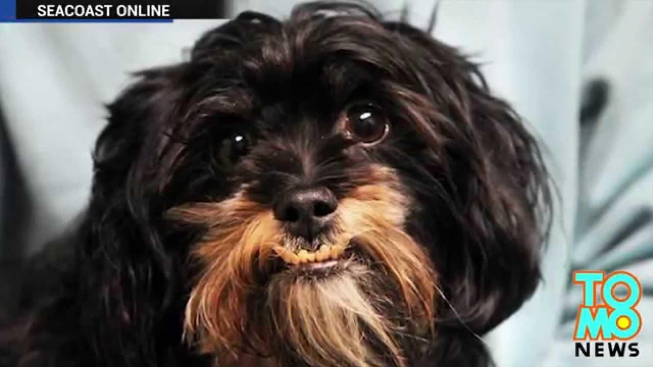 troubles de voisinage un homme trangle le chien de sa voisine parce qu il aboyait de trop. Black Bedroom Furniture Sets. Home Design Ideas