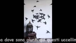 Radiodervish راديودرويش Birds