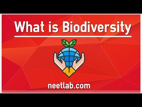 Understanding What is Biodiversity | NEET Preparation by NEETLab