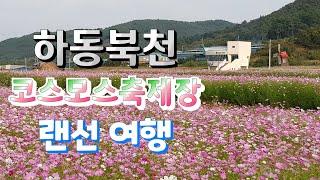 (최초공개)하동북천 코스모스메밀축제장 랜선여행 가을맞이…