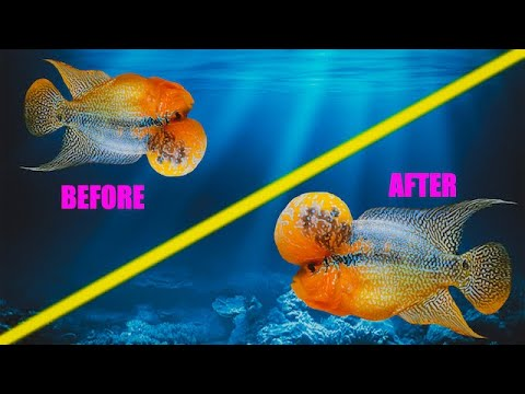 How I Cured My Fish From Swim Bladder - Moby The Flowerhorn