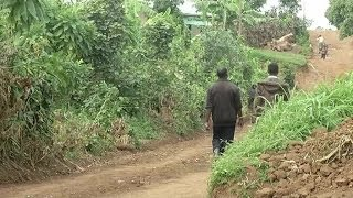 Rwanda, Distribution de vaches aux familles démunies