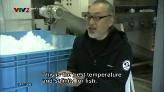 Bảo quản cá ở Nhật  Nguồn Nhật bản ngày nay - VTV2
